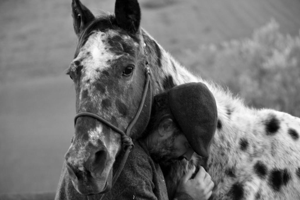 Emotional intelligence and horses