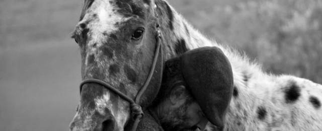 Intelligenza emotiva e cavalli