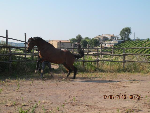 Impennate pericolose di un cavallo - Avere un cavallo ...
